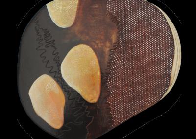 Lichens – Le lien